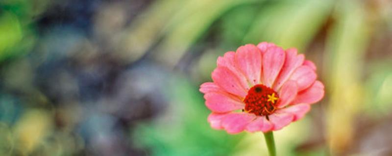 太阳花有没有雄蕊和雌蕊