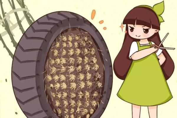 这花太能生,根系长满一轮胎,必须要换盆!
