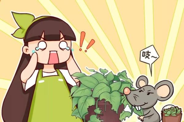 家里养的宝贝花,老鼠最爱偷吃,一夜啃个精光!