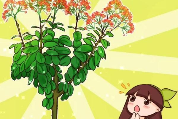 """长寿花半年养成""""长寿树"""",长成1米9大高个,真气派!"""