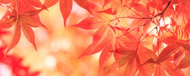 红枫盆景需要修剪吗,修剪的方法