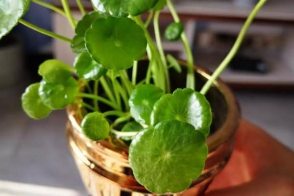 1杯水就能养活的花,干净卫生,家里养有气质!