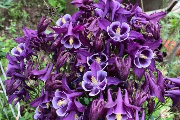 春天养盆它,名字土不拉几,开花比月季还美!