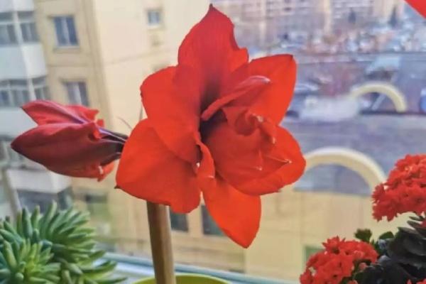姐姐种的花,根上长个黑窟窿,难怪不开花!