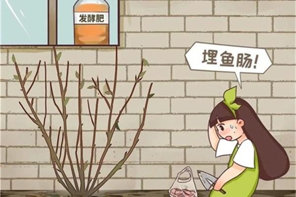 春天正施肥,氮磷钾肥别买了,自己在家就能做!