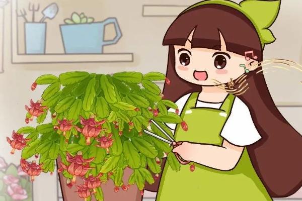 花后赶紧剪一刀,剪完就开花,一直剪一直开!