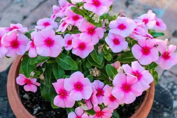 8种花,春天随便养,疯狂开花累不坏!