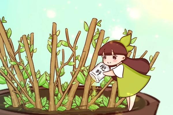 3月养花,爆笋、爆芽,全靠这些技巧!