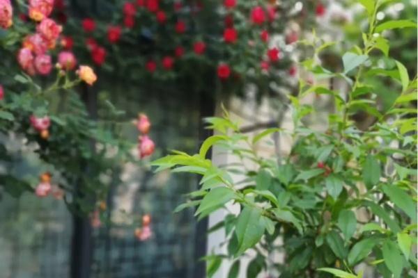 一方小院,养花种草,这样就挺好!