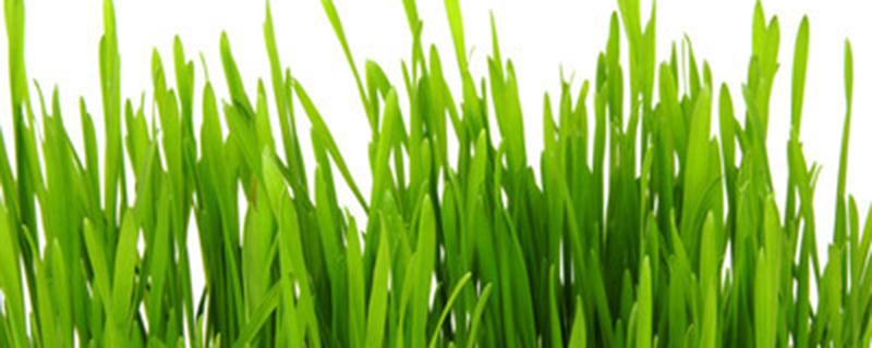 绿兰是属于什么兰花