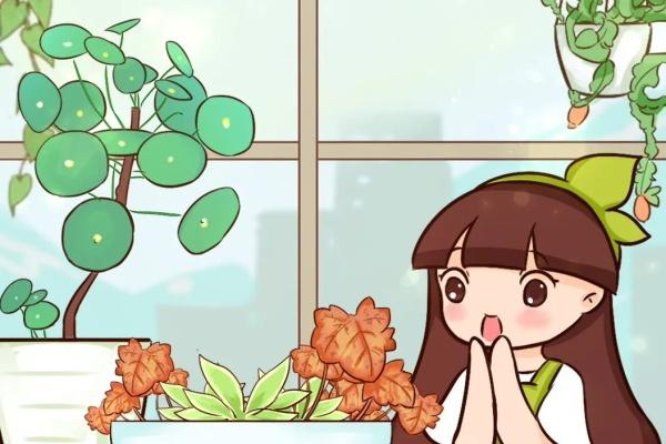 别养绿萝了,20种耐阴花,随便一盆惊艳全场!