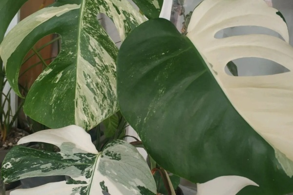 别养绿萝了!这6种耐阴花,上档次、有格调,随便养一盆特美!
