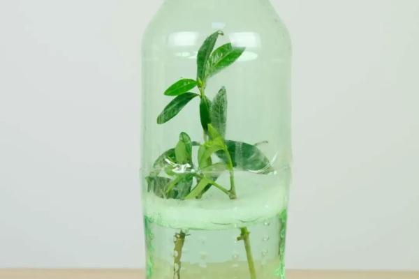 1个塑料瓶,竟有8种养花方法,省钱又好用!