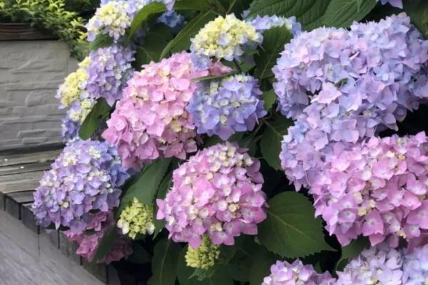 最耐阴的花,光不好也能蹭蹭开,开花比拳头还大!