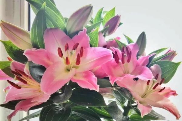 现在养这花,下个月疯狂开花,错过再等一整年!