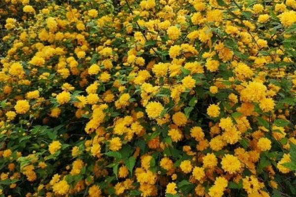 6种花种在大门口,花开一整片,镇宅又霸气!