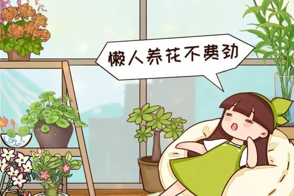 懒人救星!最好养的花就是它,绿萝竟然排不上号!