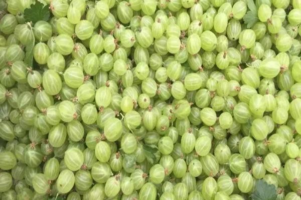 这花全国都能养,耐热又耐寒,满树都是小西瓜!