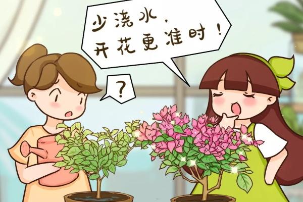 10种耐旱植物,平时少浇水,开花更准时!