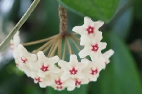 20种花,春天打开小机关,开花提早半个月!