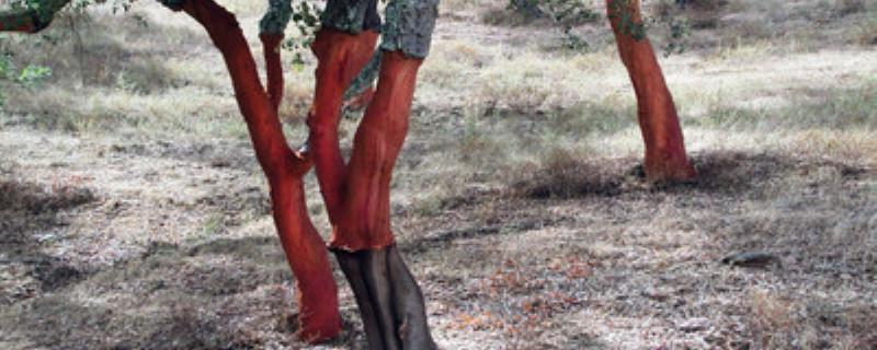 树木锯了伤口怎么处理