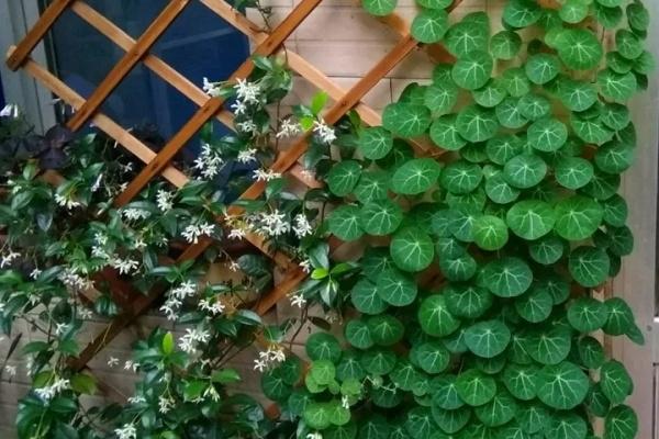 这18种花,挂窗台窜成绿窗帘,天热了遮阴真凉快!