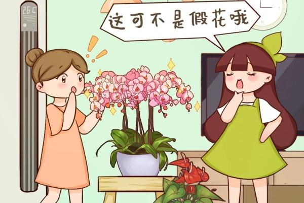 这花能开2个月,长的像假花,谁见都要摸一下!