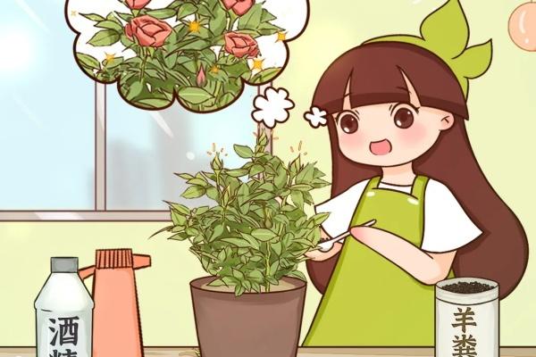 冒花苞了,要这么养,才能顺利开花!
