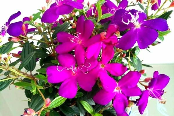 这5种花真稀罕,叶子越晒越红彤彤,一盆能开20朵!