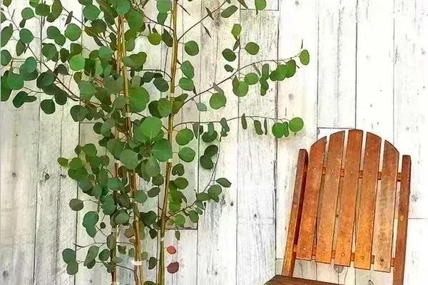 今年流行的小众花,家里养1盆,特别有气质