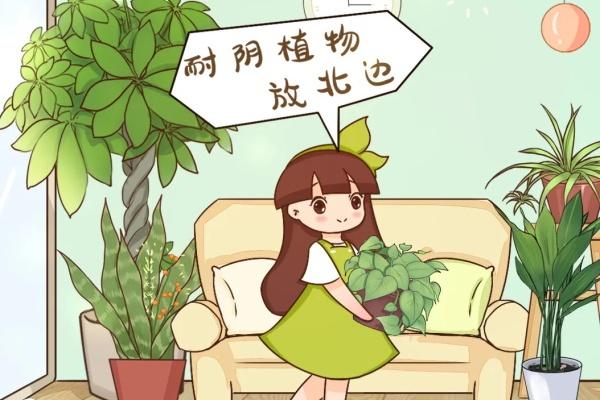1间房1盆花,养最合适的,全家都健康!