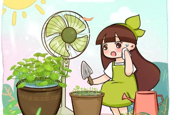 这10种花,天越热越扦插,3天冒出大白根!