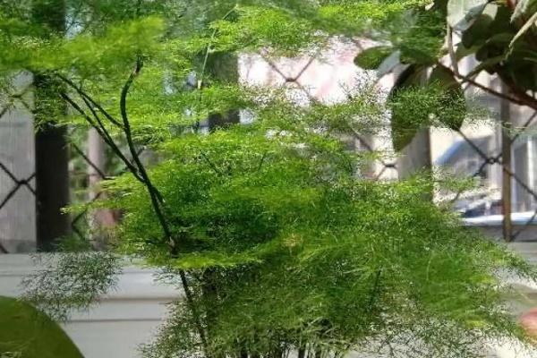 6种杀菌花,杀菌去异味,家里变成绿森林!