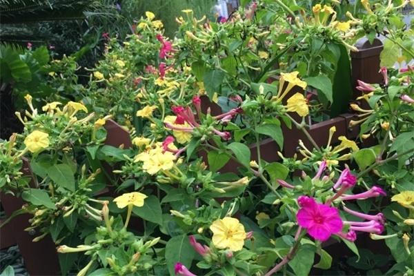 农村院子没人管的花,一长一大片,天热美翻了!