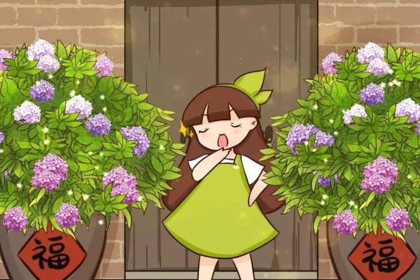 绣球花的养护方法,给点光就开爆,蓝紫色的最气派!