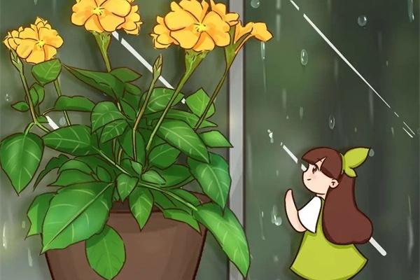 10种花爱淋雨,下雨扔外面,比白菜长的还快!