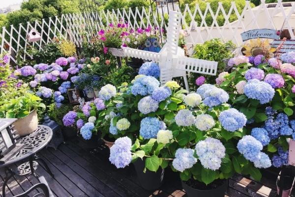 想要花园,现在就建,别等有钱!