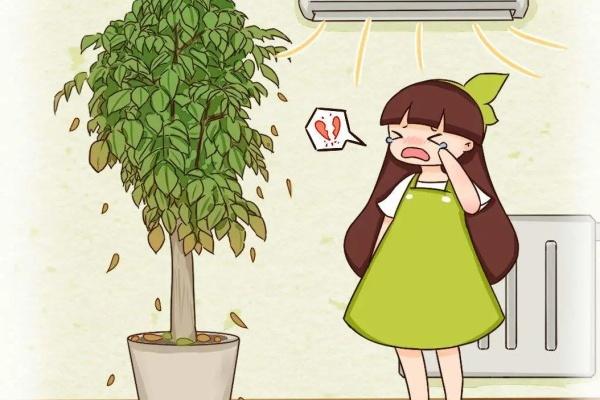 幸福树怎么养?学会这几招,再也不掉叶!