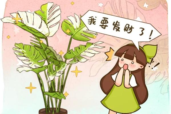 家里的花长出这种叶,千万保护好,特别值钱!