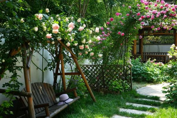 我想有个小院子,四季赏花一辈子!