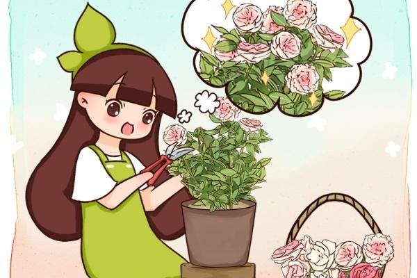 10种花,开完赶紧剪,剪完一直开!