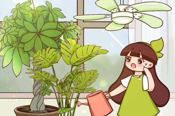 这6种花,夏天不休眠,多浇水、要施肥!