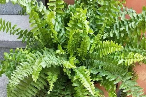 绿萝吊兰扔了,养这7种花,夏天最清凉!