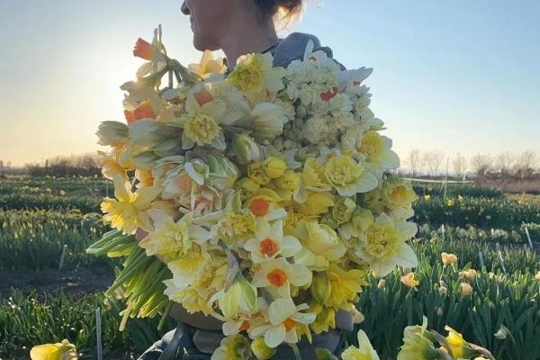 """这种大""""蒜头"""",塞盆里就开花,一口气开20朵!"""