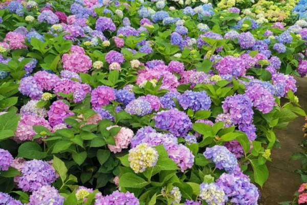 最耐阴的5种花,夏天养一盆,清凉不怕热!