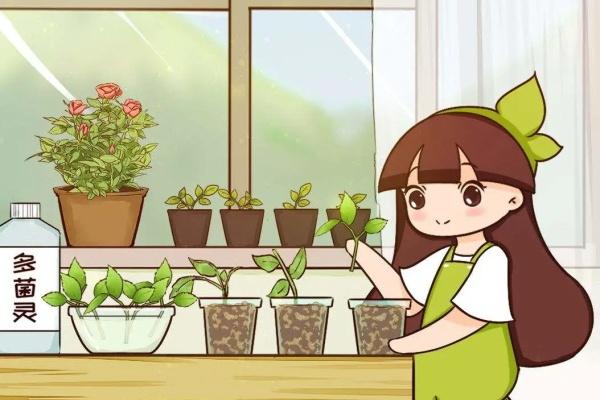 天热了,这3种花要扦插,留个种越养越多!