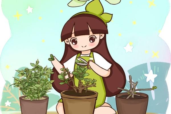 养死的花别扔,撸光叶、剪光头,1个月猛长爆开花!