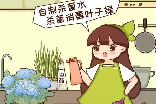 给花喷点杀菌水,虫子全杀死,养花不招虫特干净!