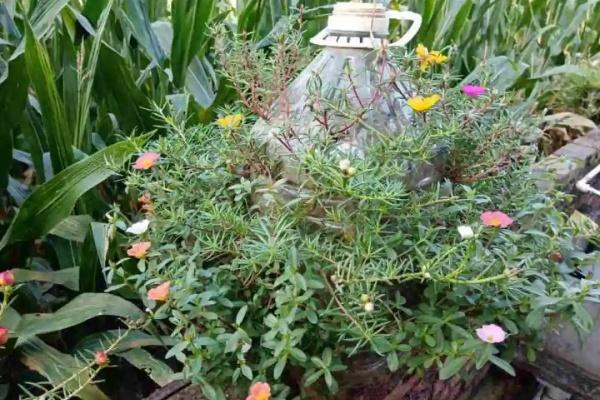 塑料瓶、油桶,养花做造型,真是绝了!