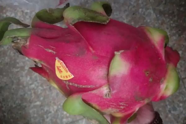 火龙果的13个品种,嫁接蟹爪兰,还能结果子!